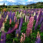 Spring Flowers Patagonia Shoulder Season